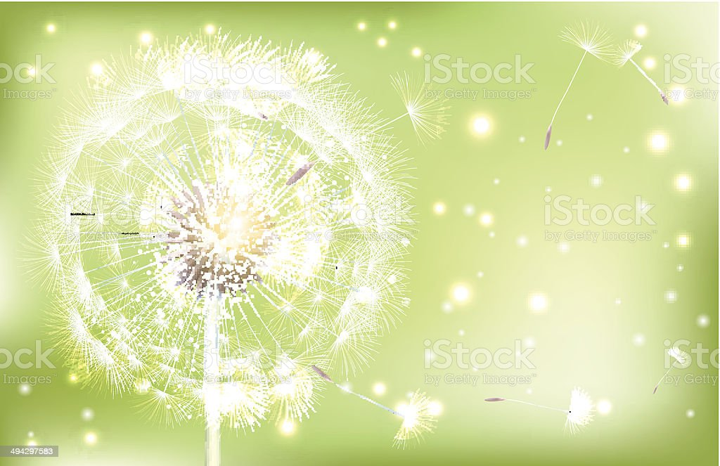 Vector White Dandelion on green background — Illustration. royalty-free stock vector art