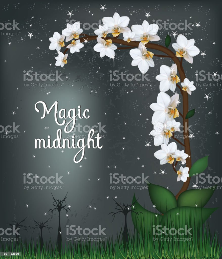 Vector- White orchid plant. Moth mini white orchid flowers on dark background with stars and words  Magic Midnight. Vector saved in eps10. Mesh. vector art illustration