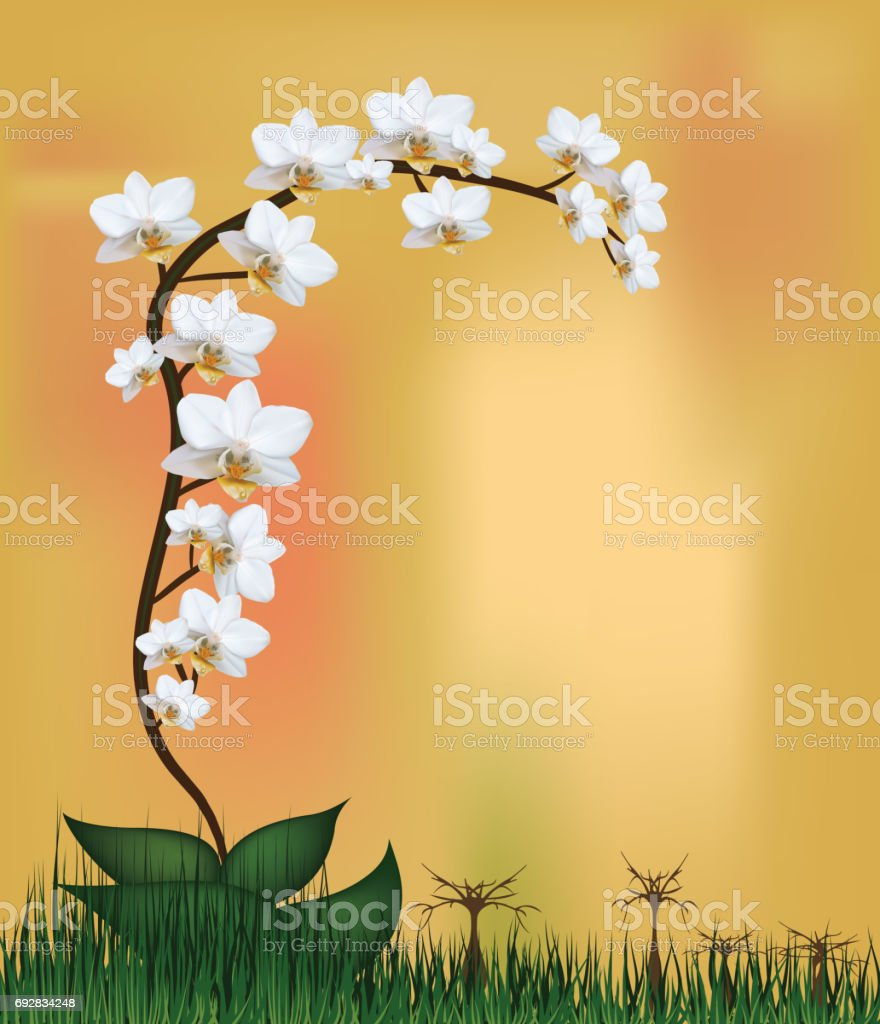 Vector- White orchid plant. Moth mini white orchid flowers on orange background with grass. Vector saved in eps10. Mesh. vector art illustration
