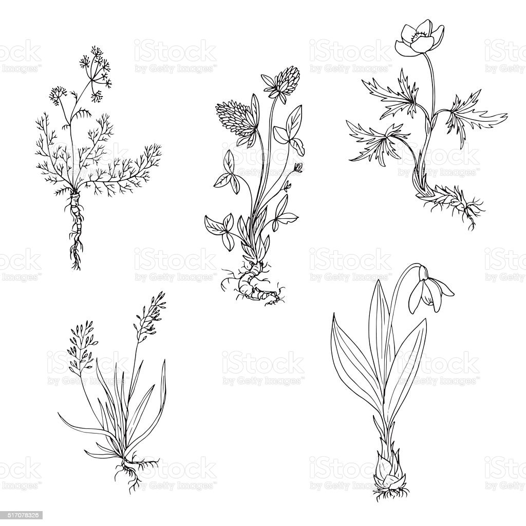 vector wild plants with roots vector art illustration