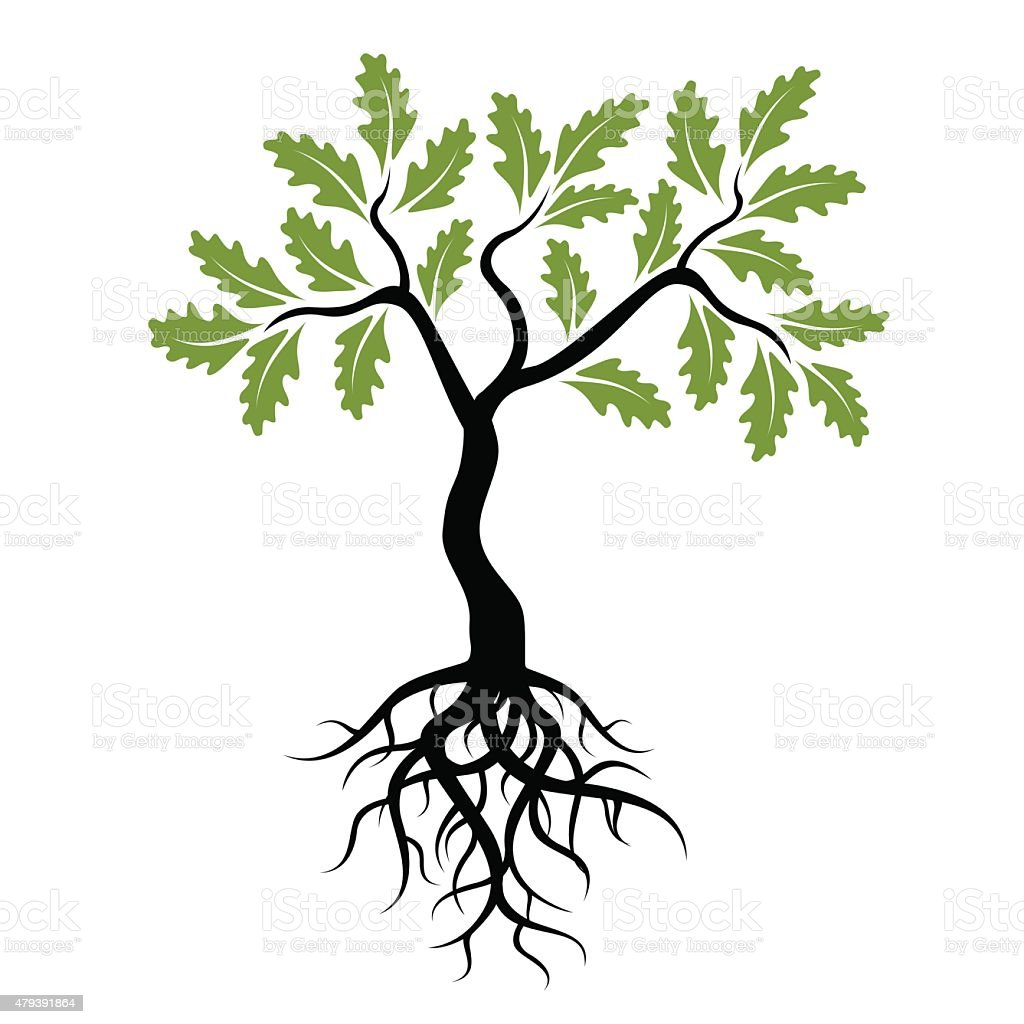 Vector Young Green Oak Tree with Roots vector art illustration
