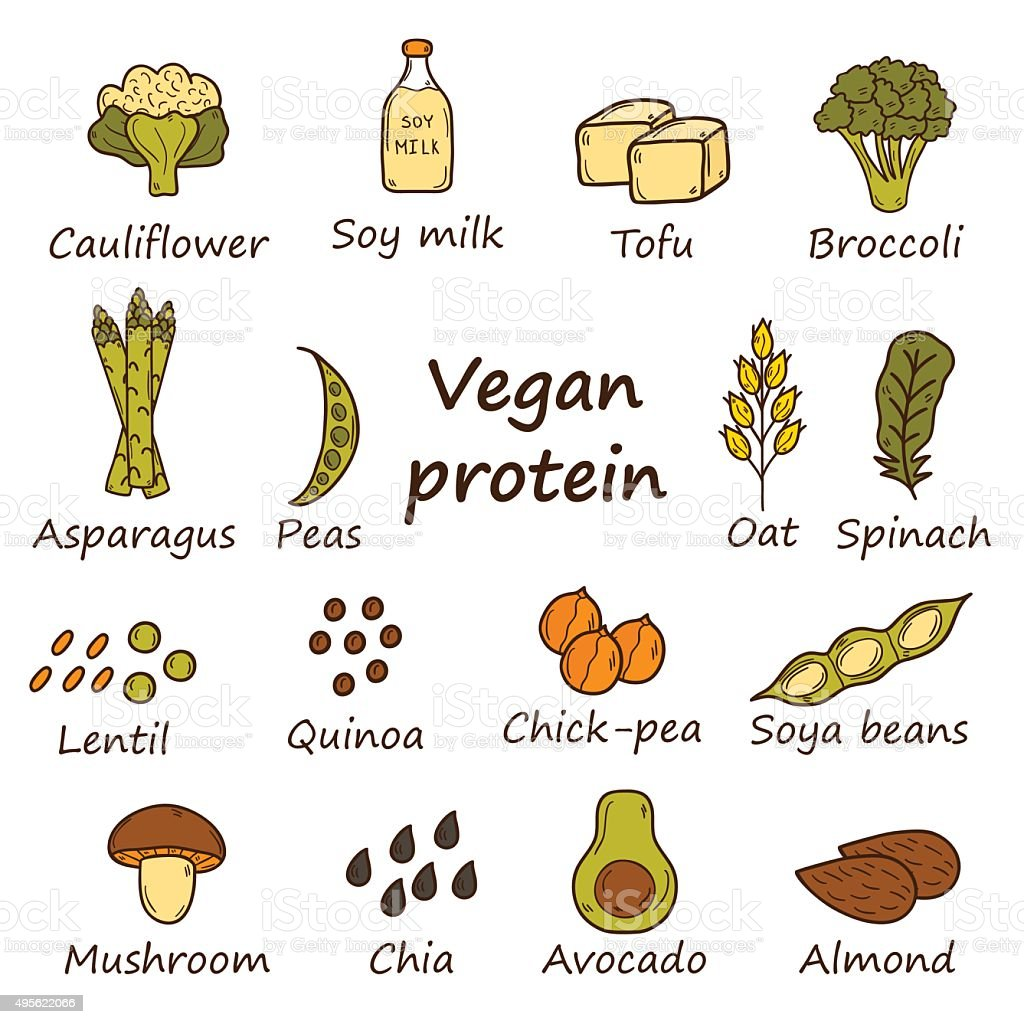 Vegan protein icons vector art illustration