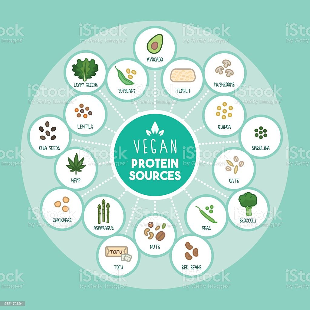 Vegan protein sources vector art illustration