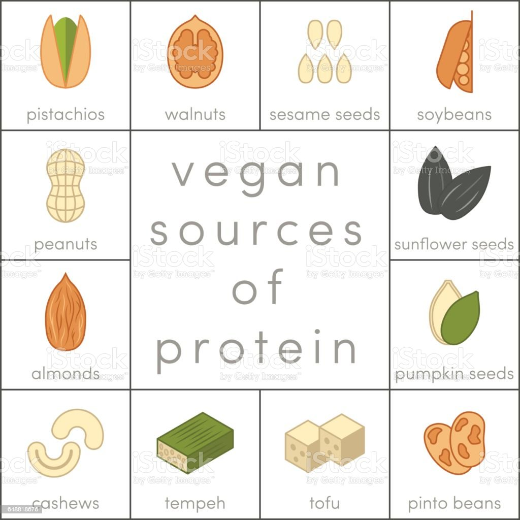 Vegan sources of protein vector art illustration