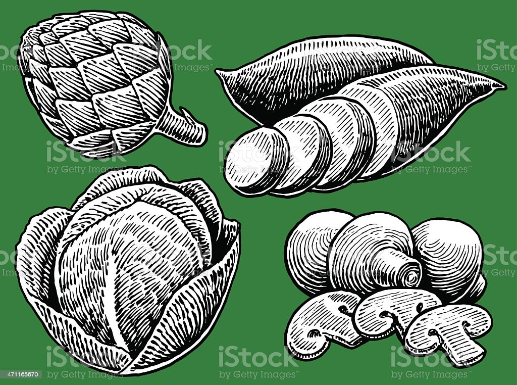 Vegetable - Cabbage, Mushrooms, Yam, Artichoke vector art illustration
