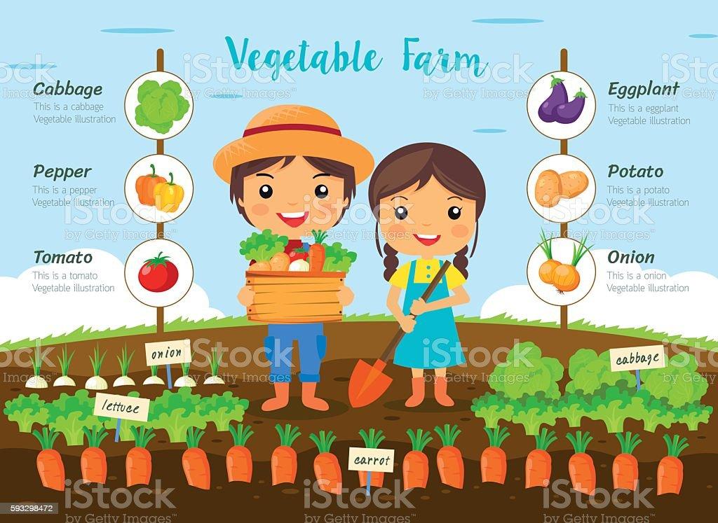 Vegetable farm infographic royalty-free stock vector art