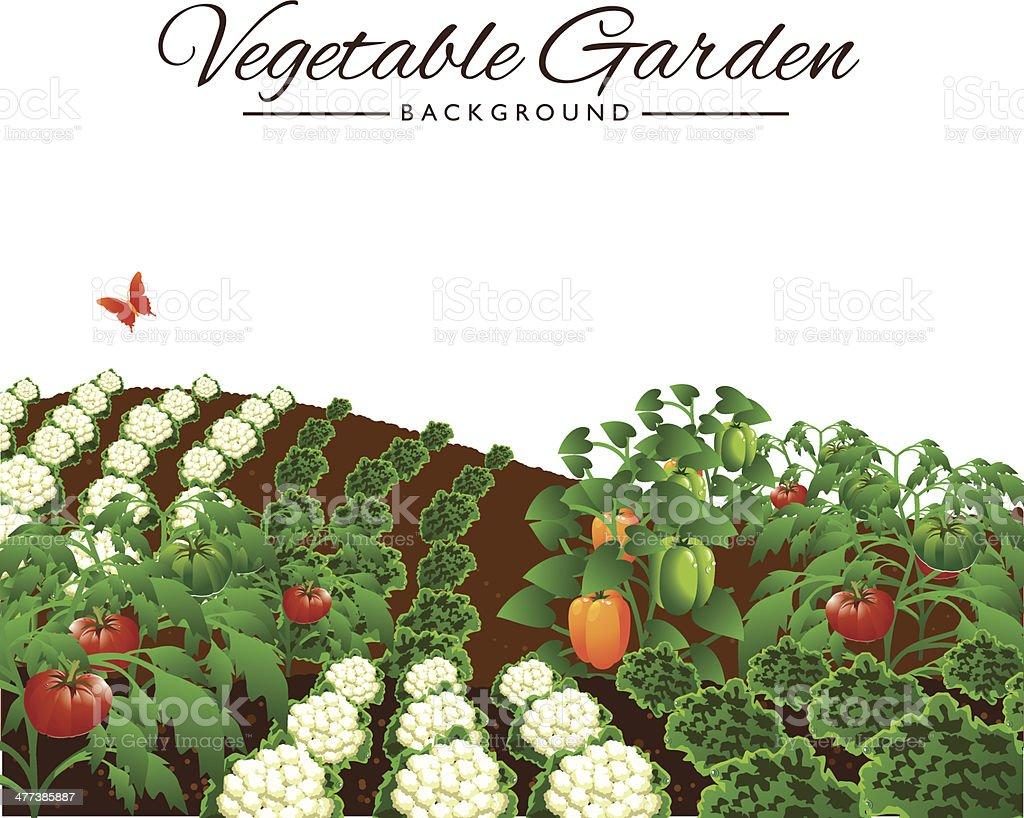 Vegetable garden isolated background vector art illustration