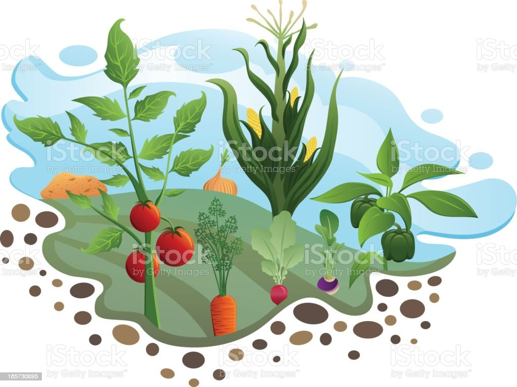 Vegetable garden art - Vegetable Garden Royalty Free Stock Vector Art