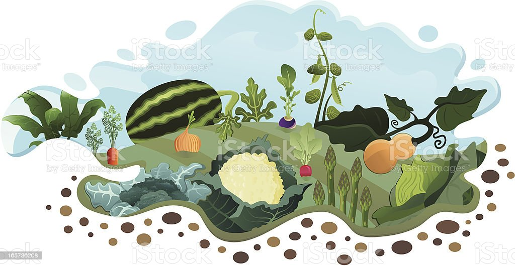 Vegetable Garden (End of Summer) royalty-free stock vector art