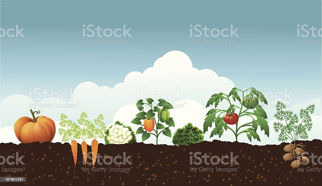 Vegetable Garden vector art illustration