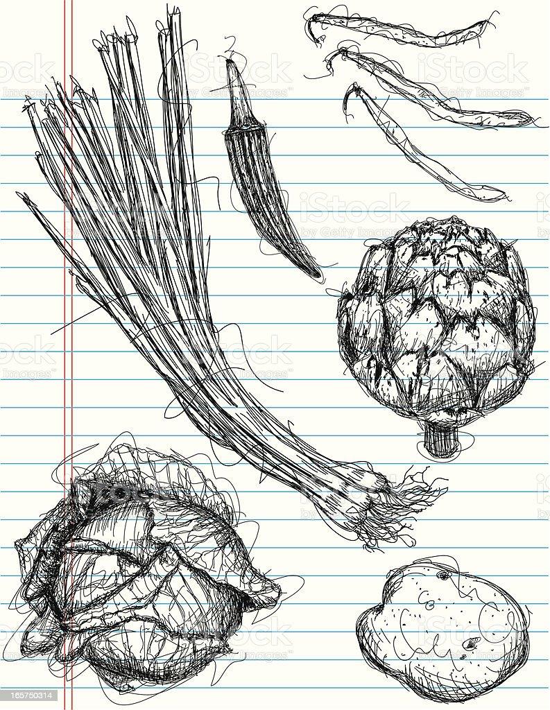 vegetable sketches vector art illustration