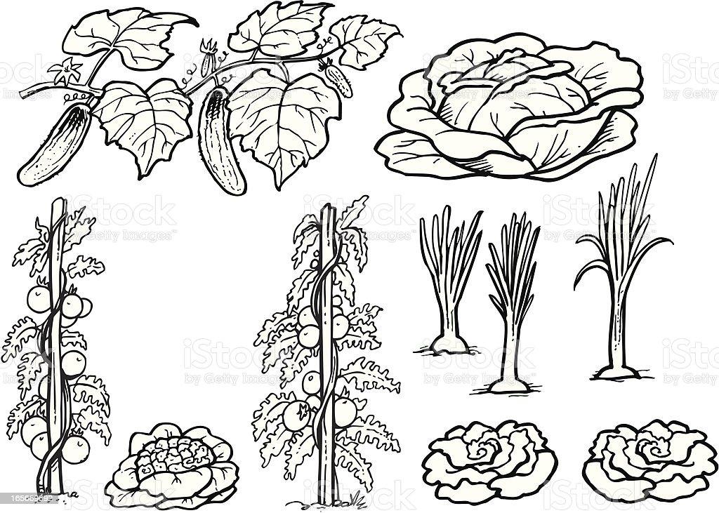 Vegetable royalty-free stock vector art