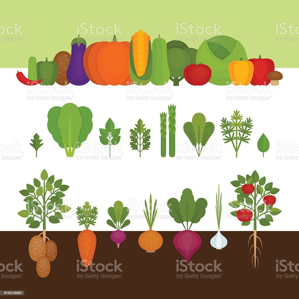 Vegetables collection. Organic and healthy food. vector art illustration