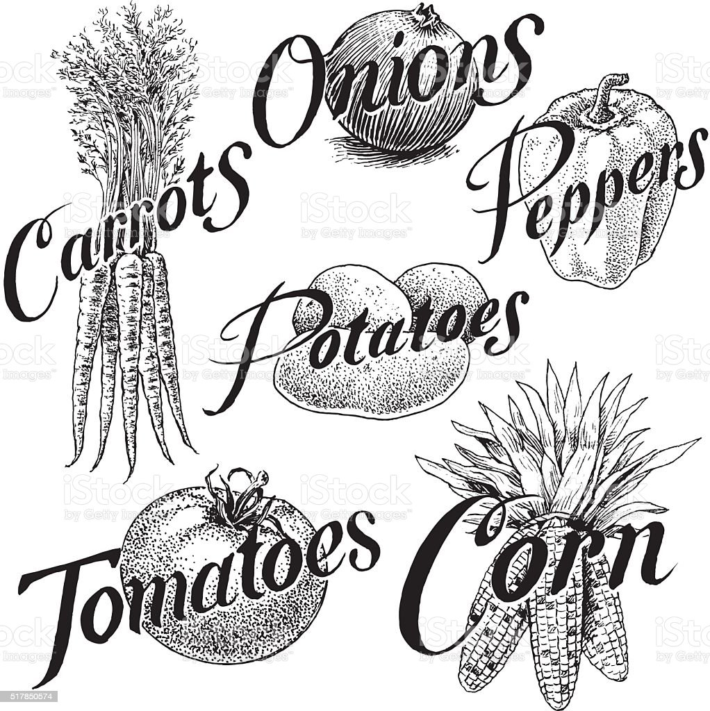Vegetables, Corn, Carrots, Onions, Pepper, Tomato, Potato vector art illustration