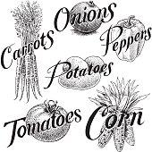 Vegetables, Corn, Carrots, Onions, Pepper, Tomato, Potato