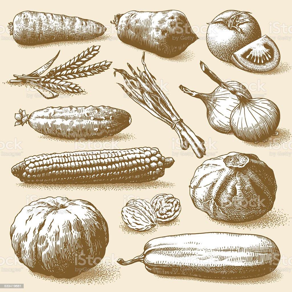 Vegetables, Fruits And Plants Vector vector art illustration