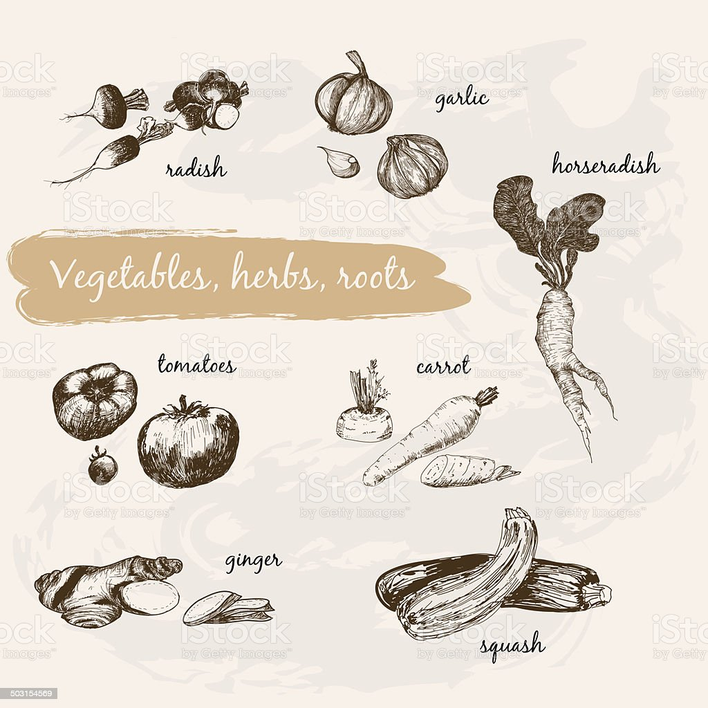 Vegetables, herb and roots vector art illustration