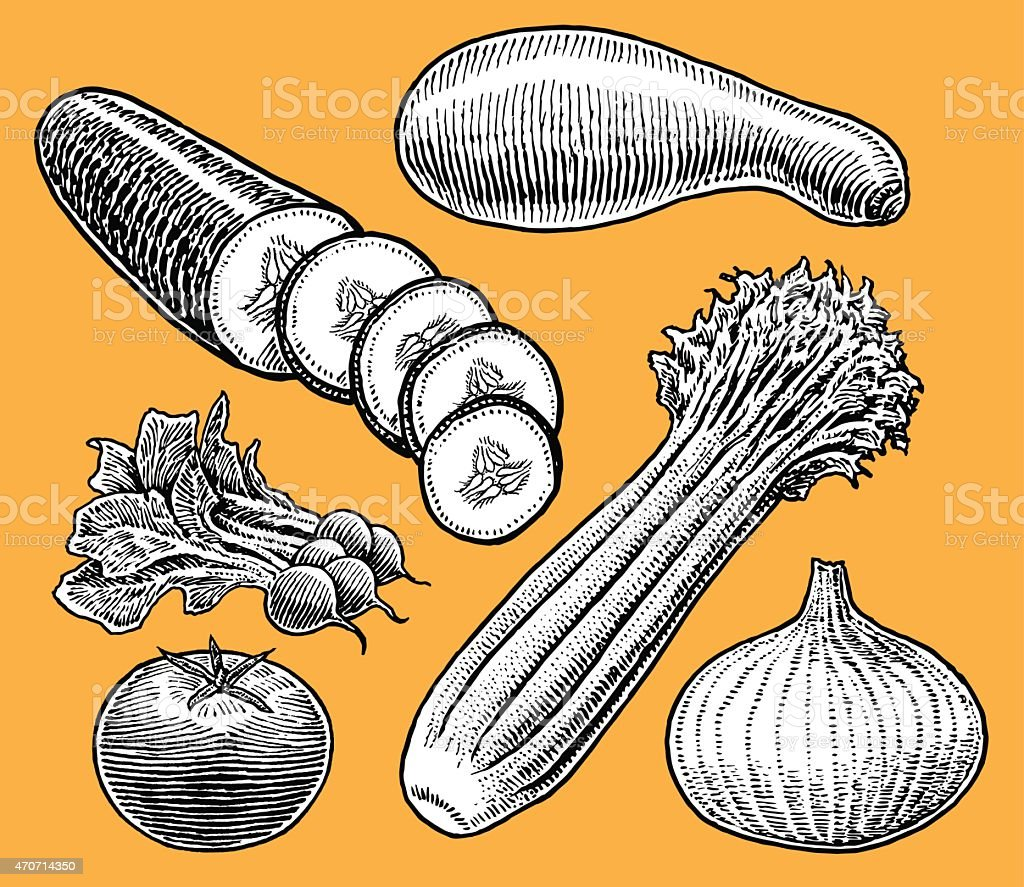 Vegetables - Onion, cucumber, squash, celery, tomato, radish vector art illustration