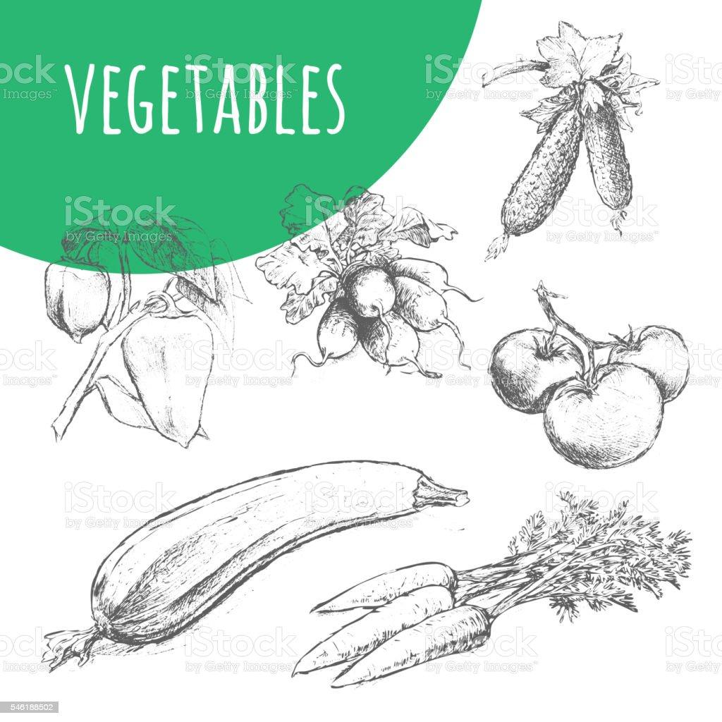 Vegetables sketch pencil illustration. Organic vegetarian food. vector art illustration