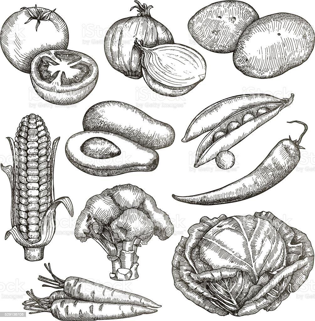 Vegetables, sketches, hand drawing vector art illustration