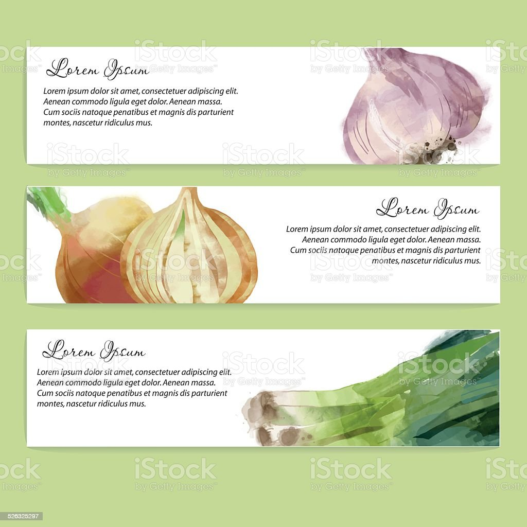Vegetables vector background. Banner design garlic, onion, leek vector art illustration