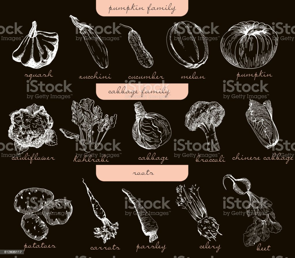 vegetables vector hand drawn vector art illustration