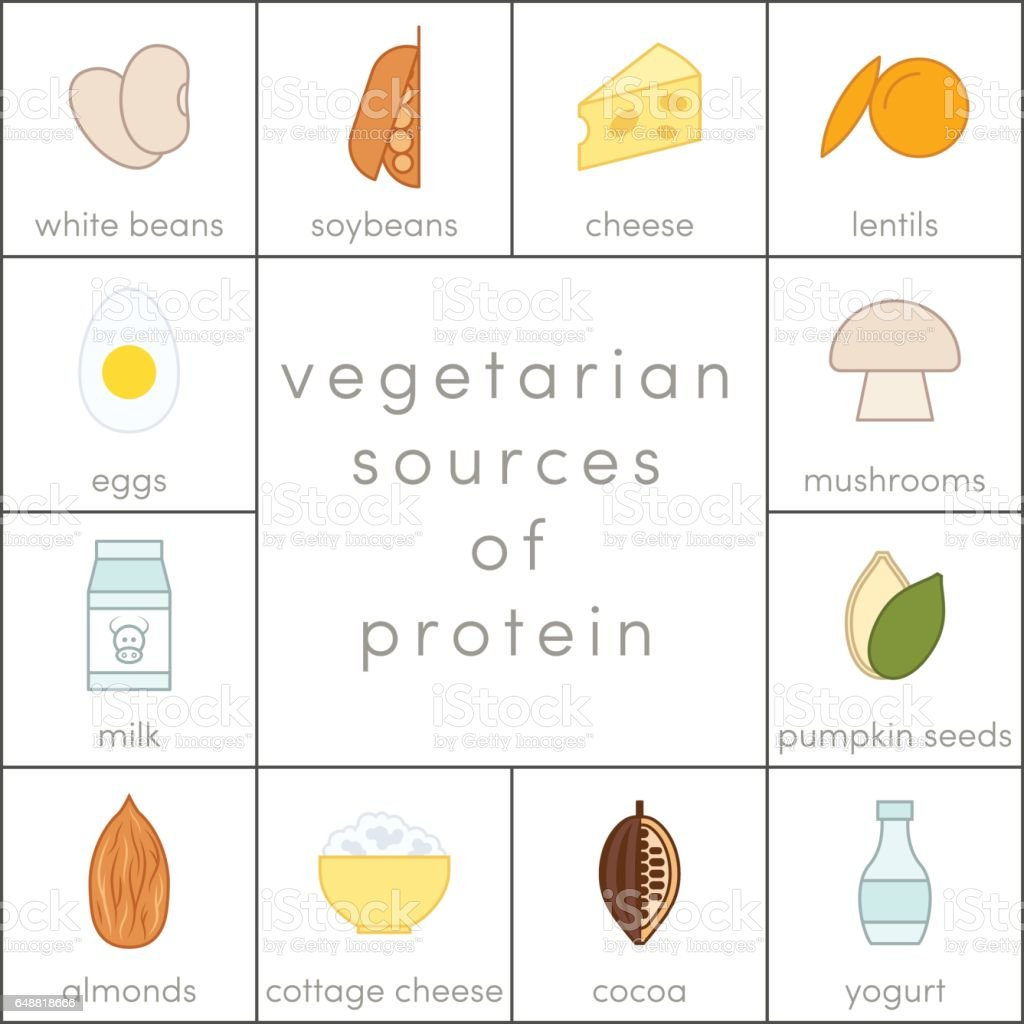 Vegetarian sources of protein vector art illustration