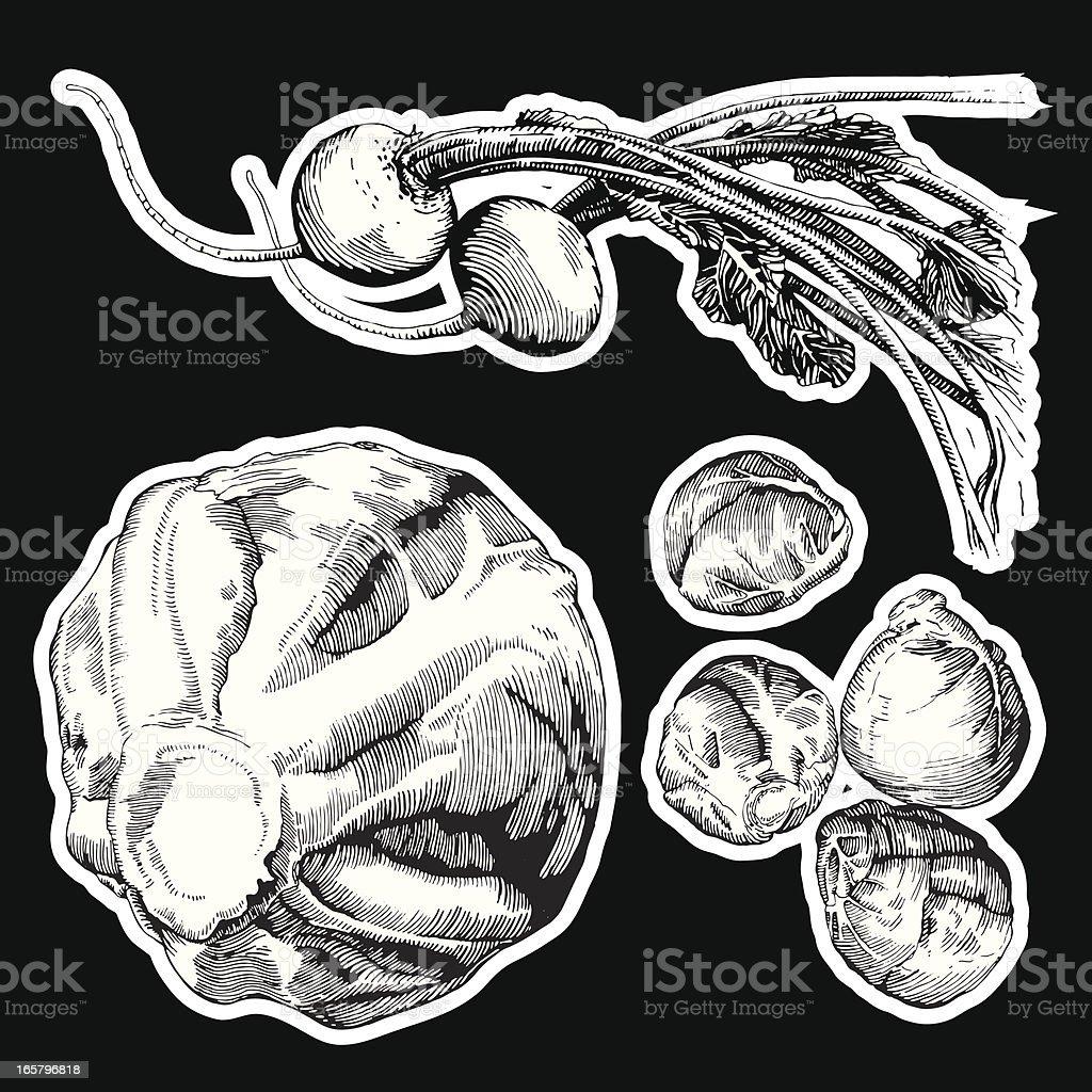 Veggies, Ink Drawing royalty-free stock vector art