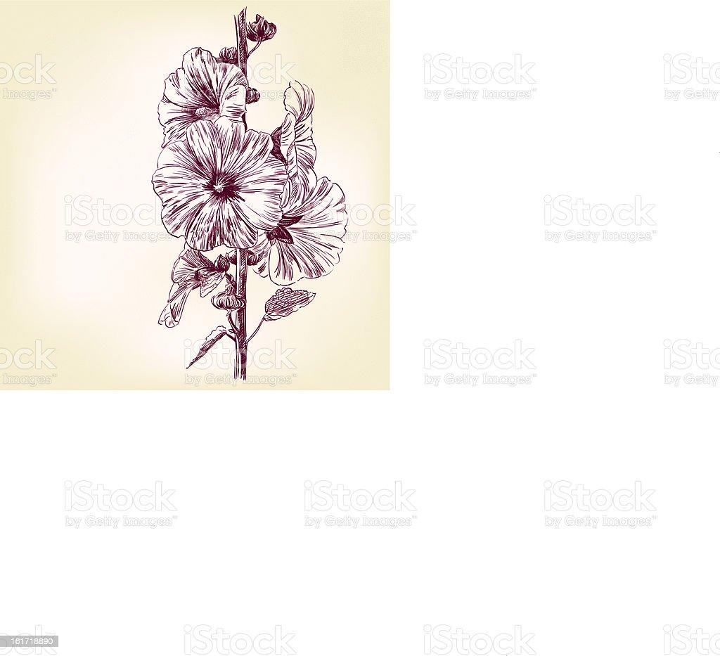 Verbascum Flowers  vector illustration royalty-free stock vector art