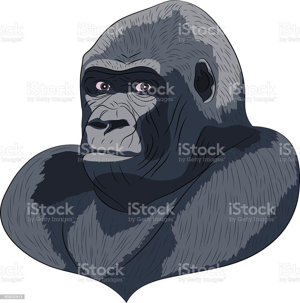 Vetor head gorilla. vector art illustration