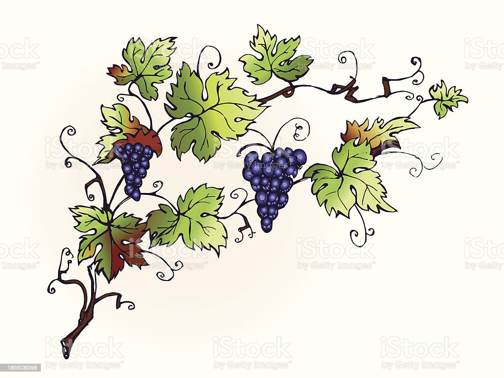 Vines royalty-free stock vector art