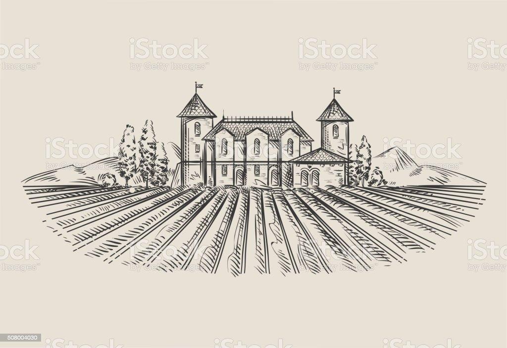 vineyard. hand-drawn sketch. vector illustration vector art illustration
