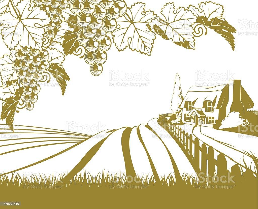 Vineyard rolling hills scene vector art illustration