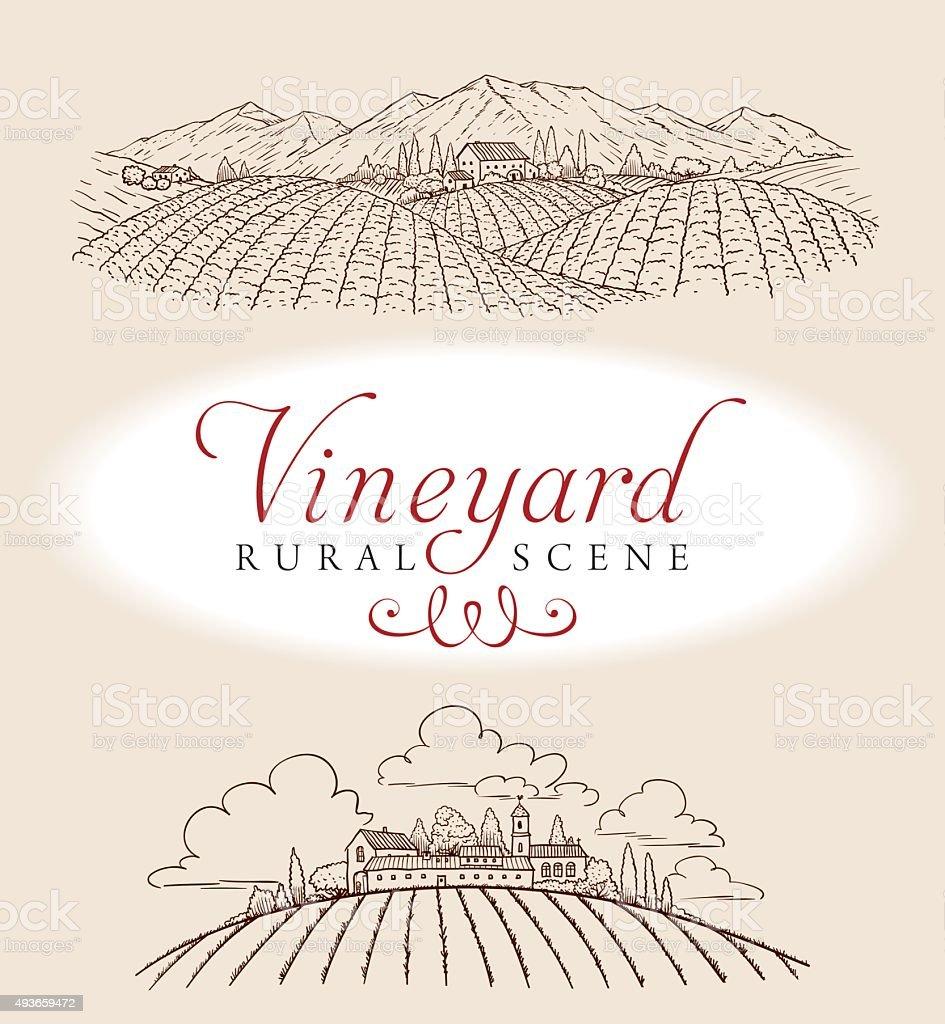 Vineyard Rural Scene vector art illustration