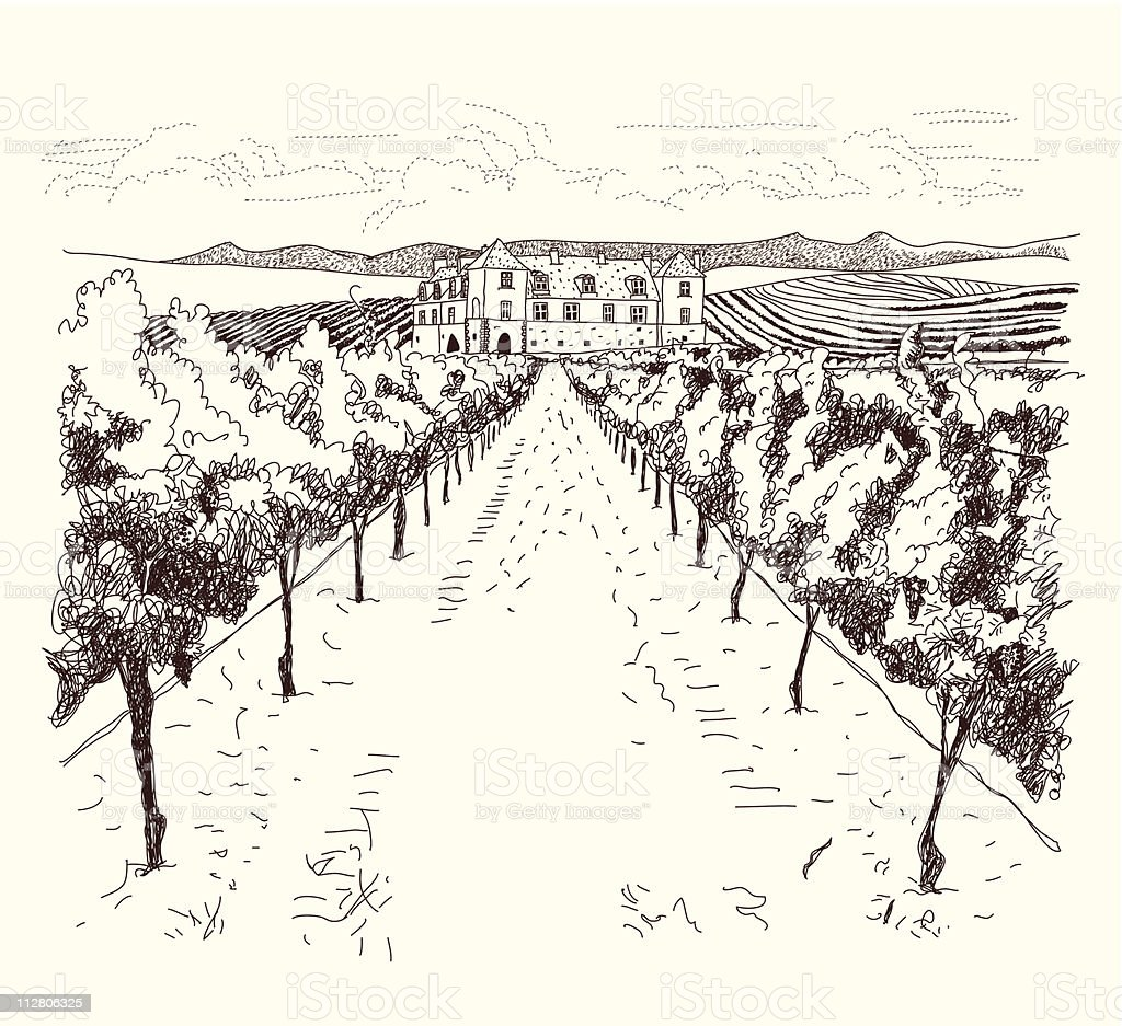 vineyard royalty-free stock vector art