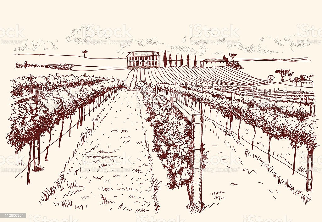 vineyard with estate in the background vector art illustration