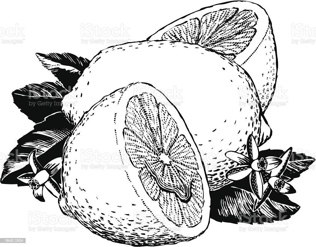 Vintage 1950s Lemons royalty-free stock vector art