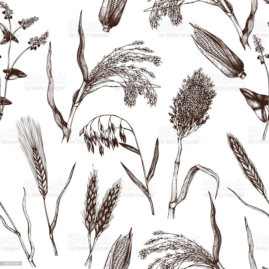 Vintage background with industrial crops illustration. vector art illustration