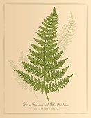 Vintage Botanical Style Fern Illustration