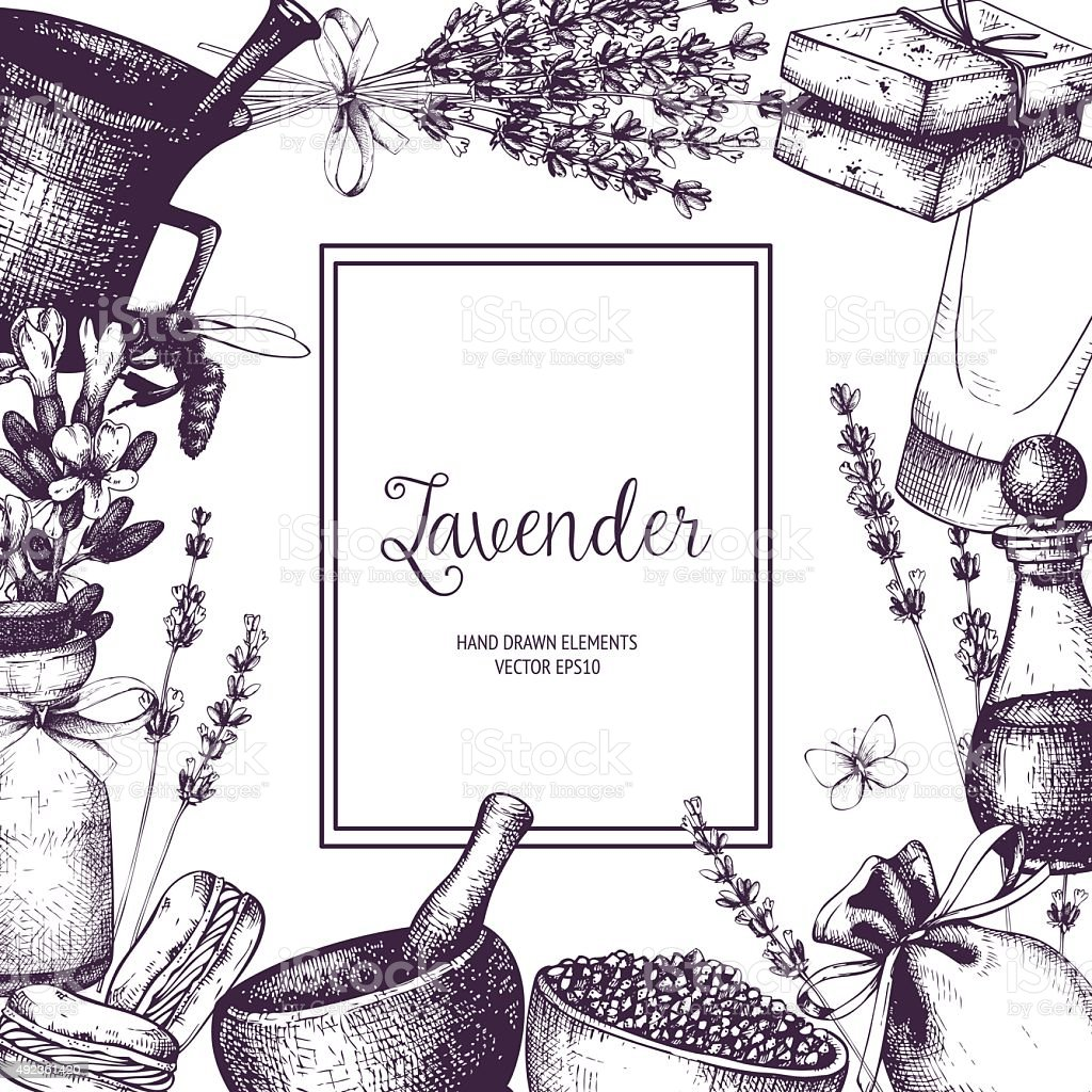 Vintage card with lilac lavender flowers sketch vector art illustration