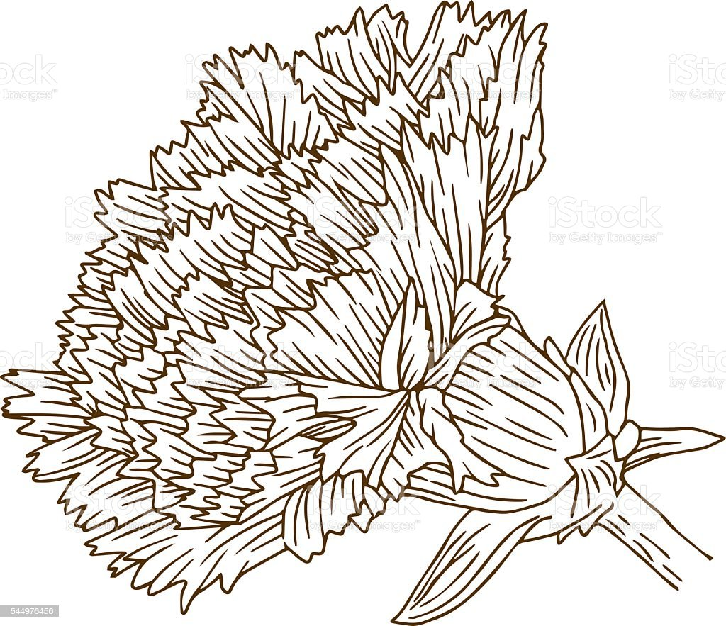 vintage carnation flower engraving line art stock vector art
