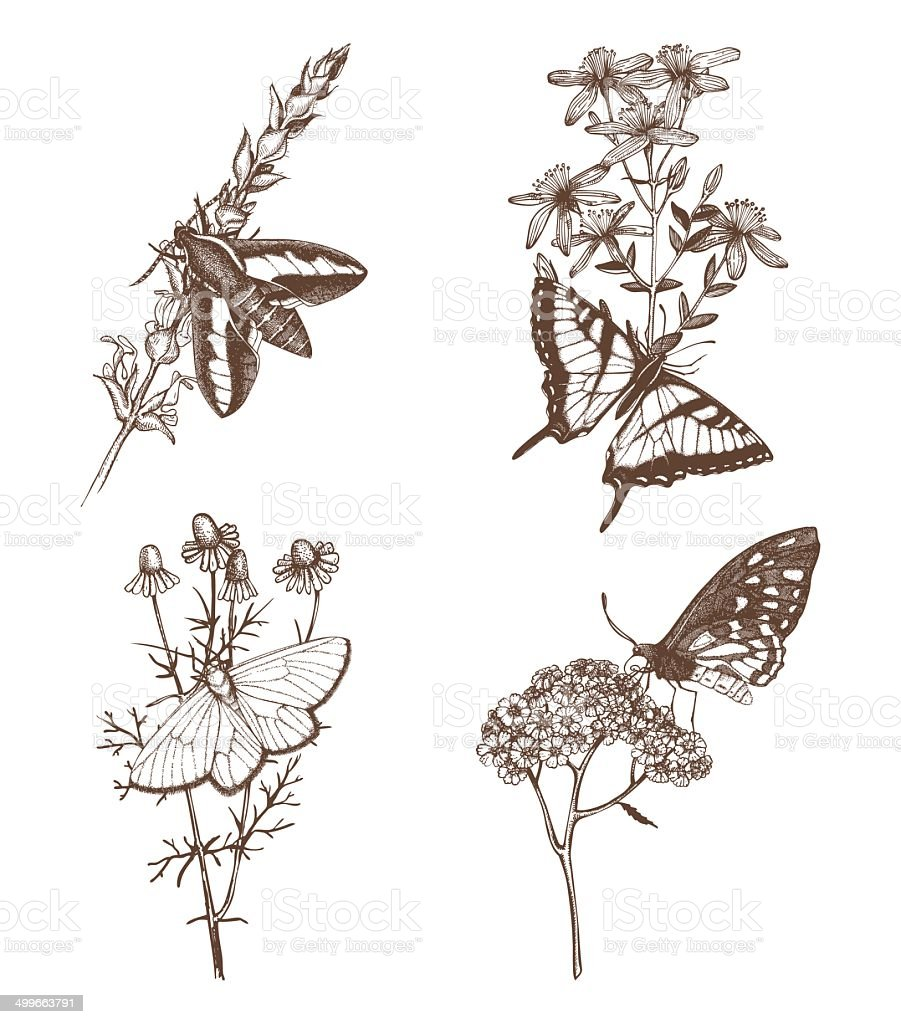Vintage collection of ink hand drawn butterflies. royalty-free stock vector art