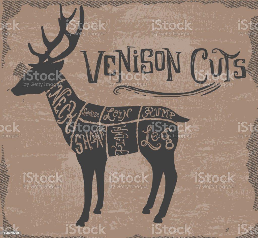 Vintage deer or venison cuts butcher diagram vector art illustration