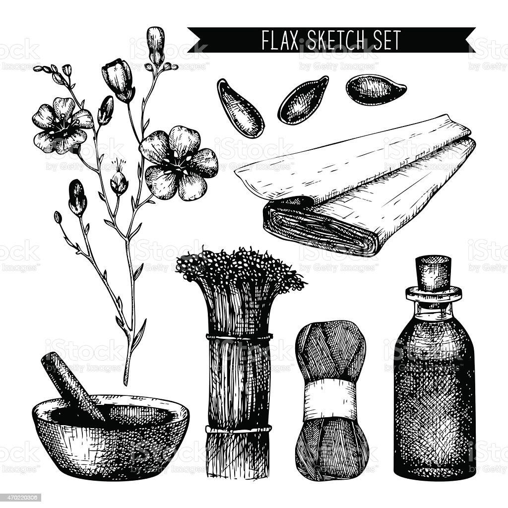 Vintage flax sketch vector art illustration