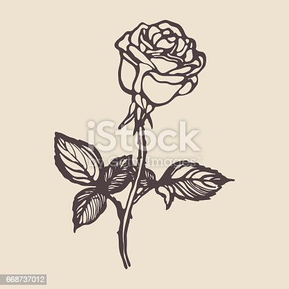 Vintage Hand Drawn Rose stock vector art 668737012 iStock