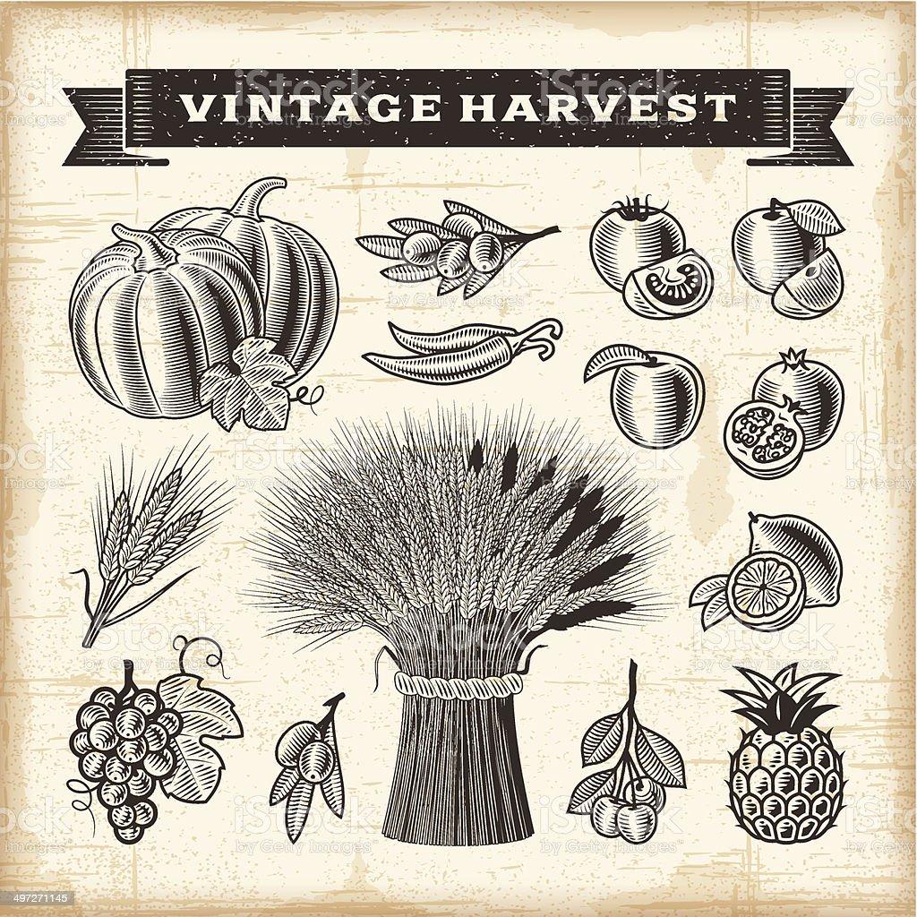 Vintage harvest set vector art illustration