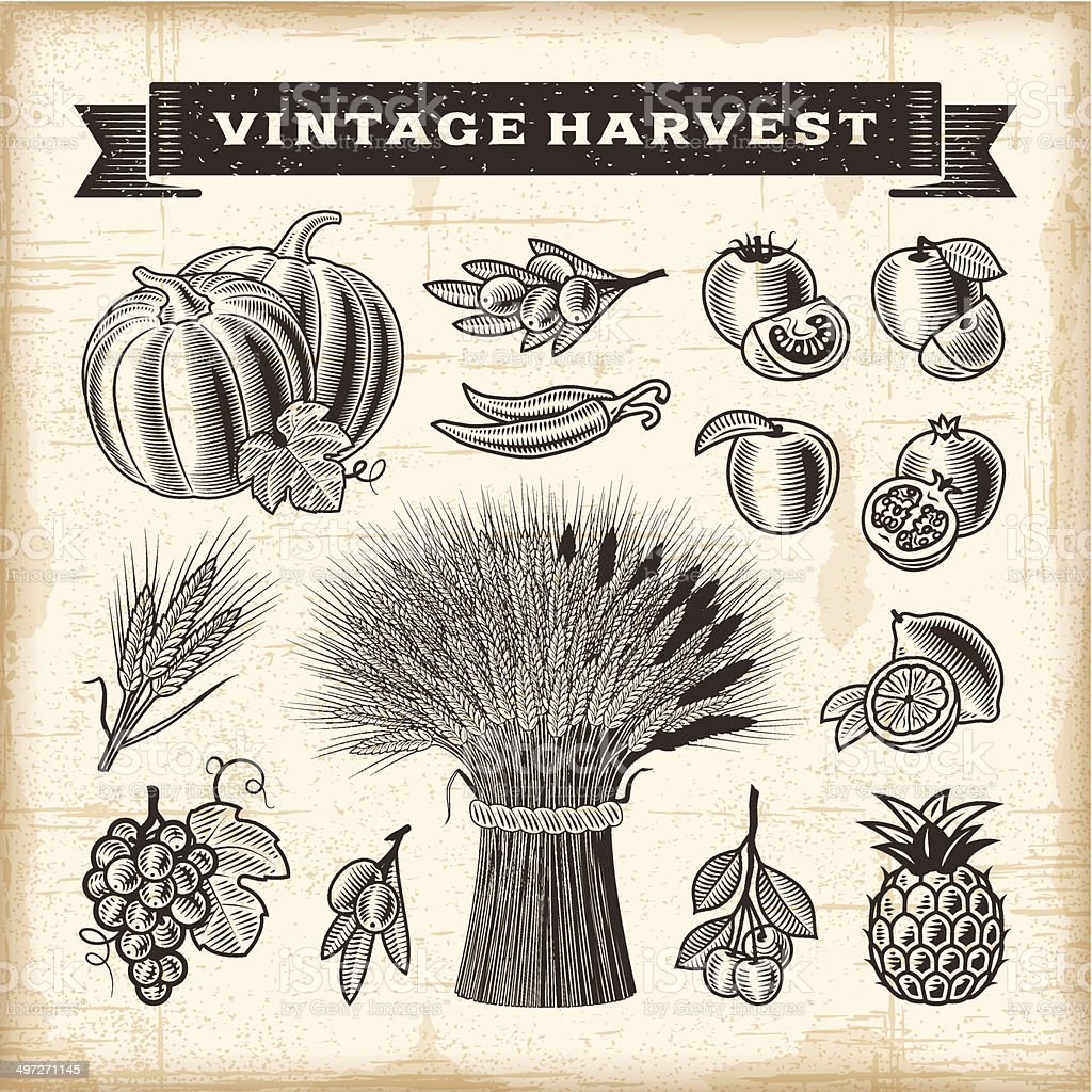 Vintage harvest set vector art illustration