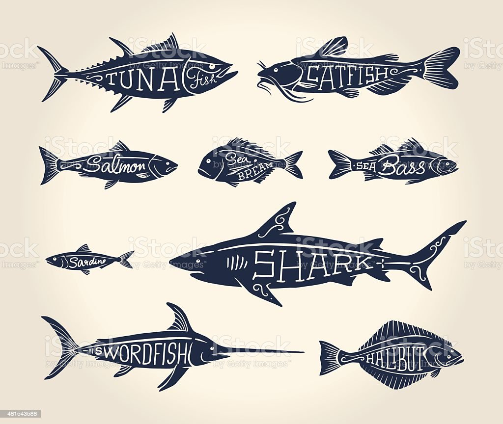 Vintage illustration of fish with names vector art illustration