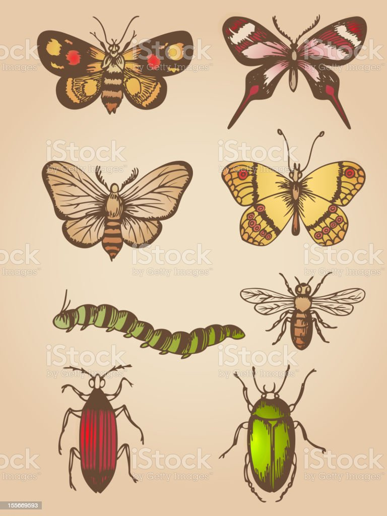 Vintage insects stock photo