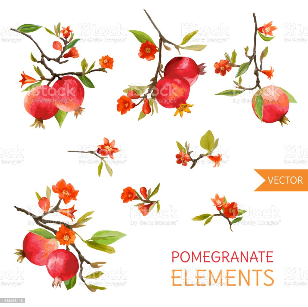 Vintage Pomegranates, Flowers and Leaves. Watercolor Style Fruits vector art illustration